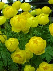 Alaskan flowers